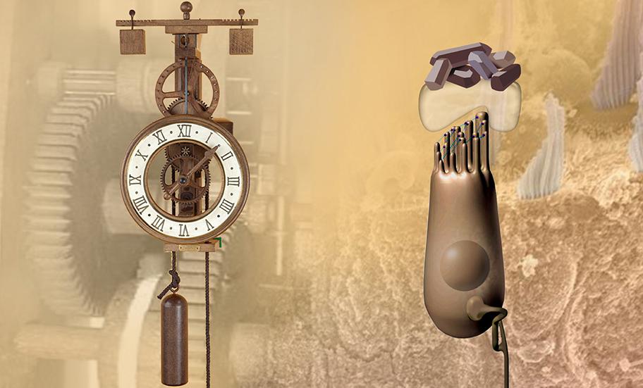 Image 2 - L'horloge Vestibulaire