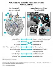 Analogie sensorielle systeme visuel appareil photo domaine source domaine cible neurosciences theorie sensorielle