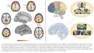 Raichle Zhang dark energy energie noire brain cerveau non-conscient non-conscious conscious unconscious theorie sensorielle sensory theory philippe roi tristan girard